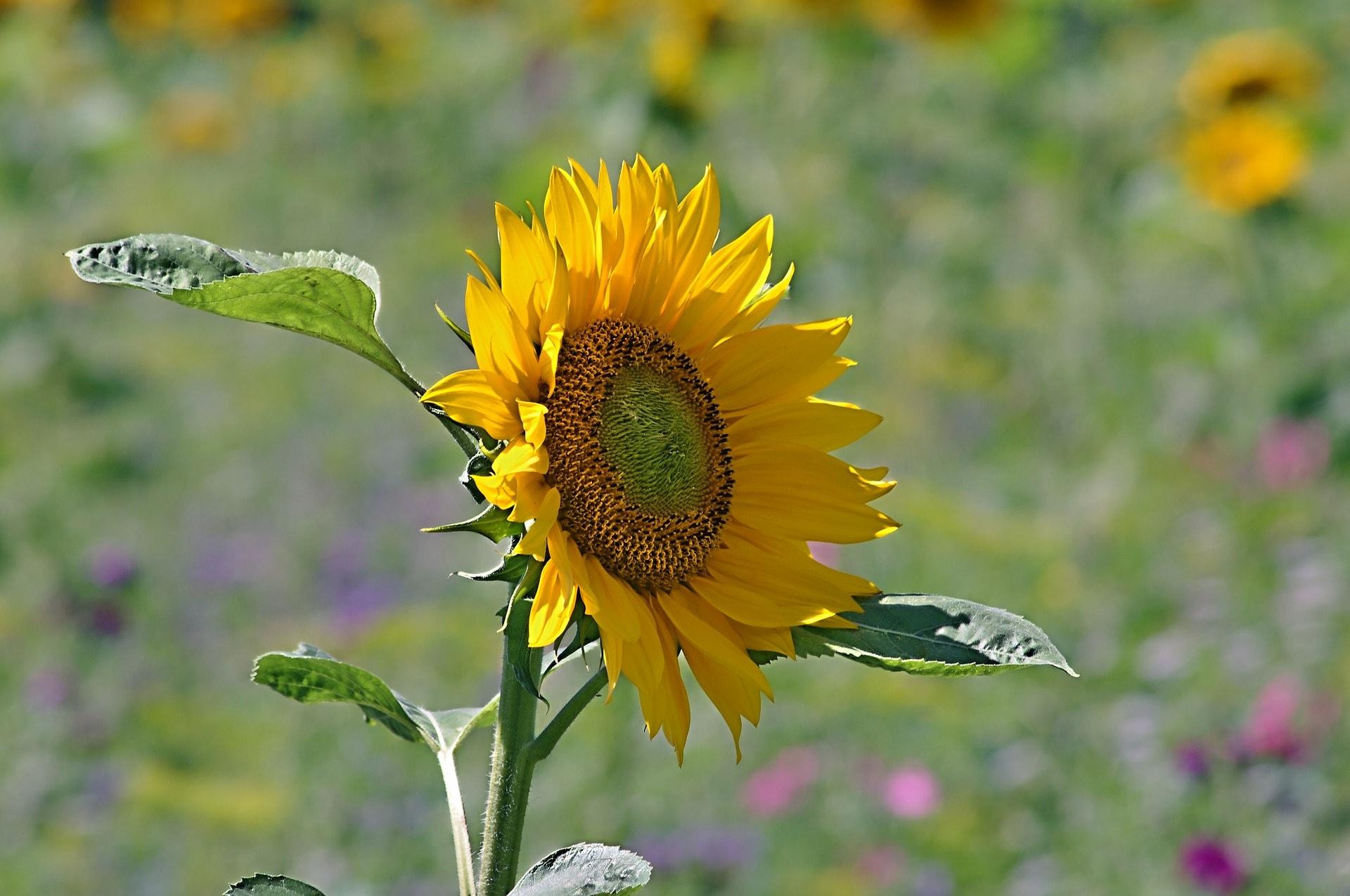 証人喚問と太陽