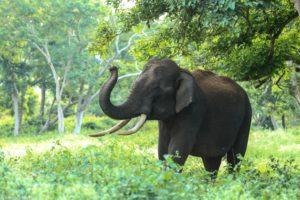 象を食べる方法