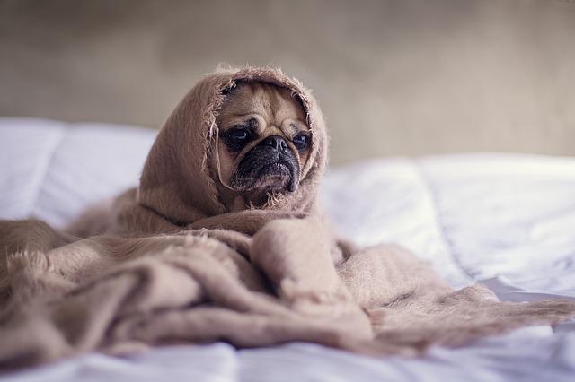 早起きすると腹痛になる?