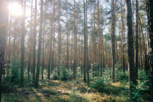 木を植えるのに2番目に良い時期は